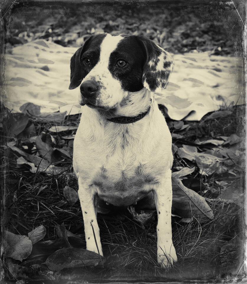 Adoptable Dog, © Wendy Erickson, 2014